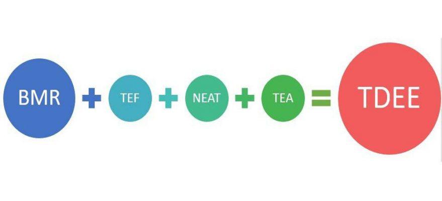 Cách tính chỉ số TDEE